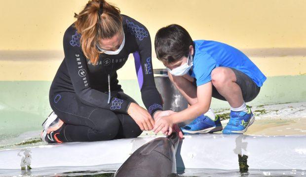 Soren a approché les dauphins