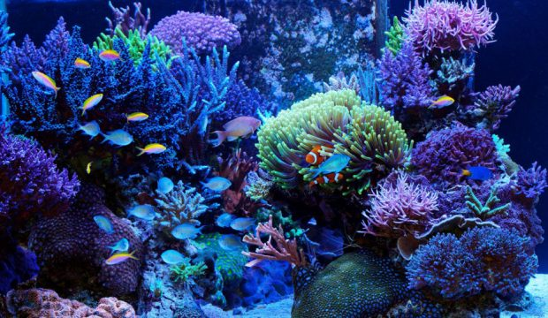 Milo a reçu des coraux pour son aquarium