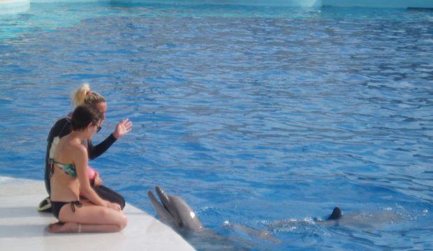 Zia a approché les dauphins