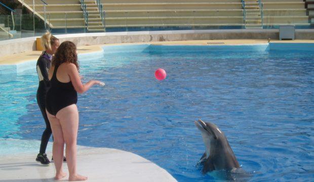Mélanie a approché les dauphins