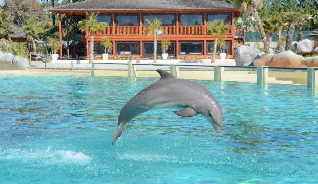 Neige a approché les dauphins