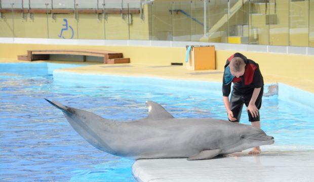Amélia a approché les dauphins