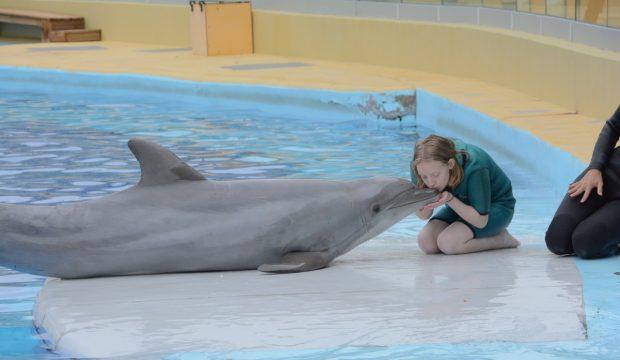 Sarah a nagé avec les dauphins