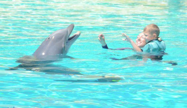 Cosmo a nagé avec les dauphins