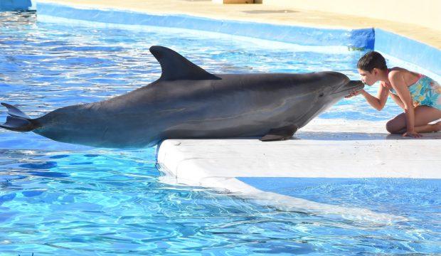 Mia a nagé avec les dauphins