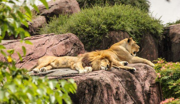 Nicolas a fait un séjour au zoo de Beauval