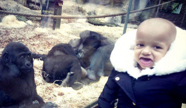 kyara a fait un séjour au zoo de Beauval