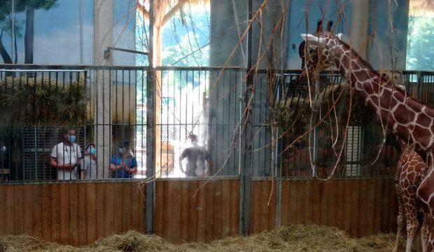 Enzo a fait un séjour au zoo de Beauval